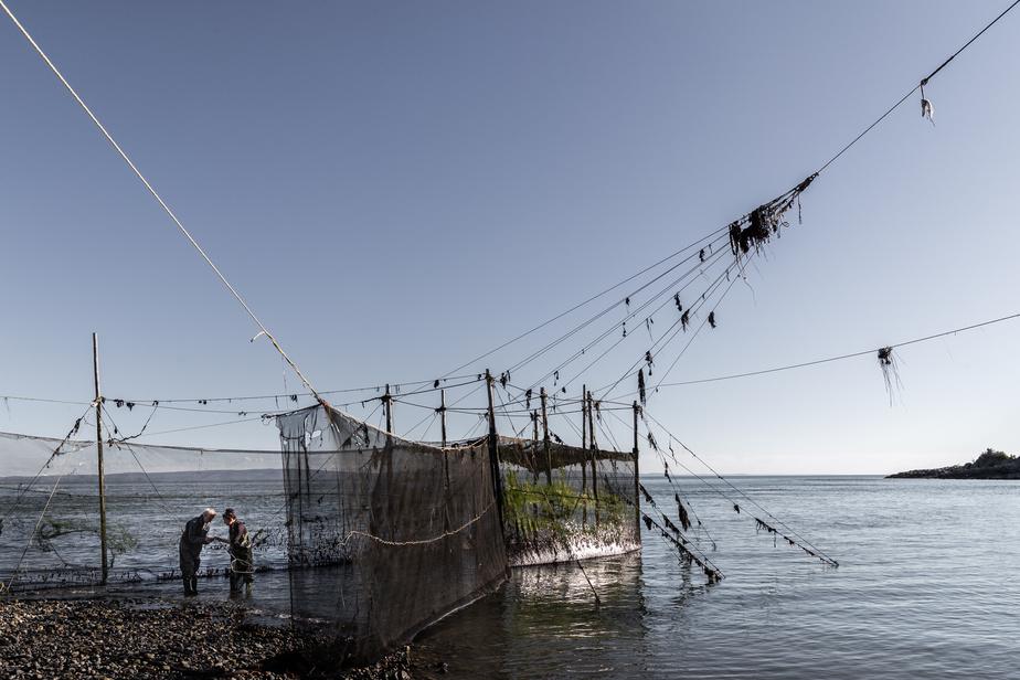 Le principe de la pêche à la fascine est de guider le poisson à l'intérieur d'une grande cage. À marée haute, le poisson se dirige vers la berge et au retour, il tente de contourner la palissade de filets, ce qui le conduit directement dans le piège.