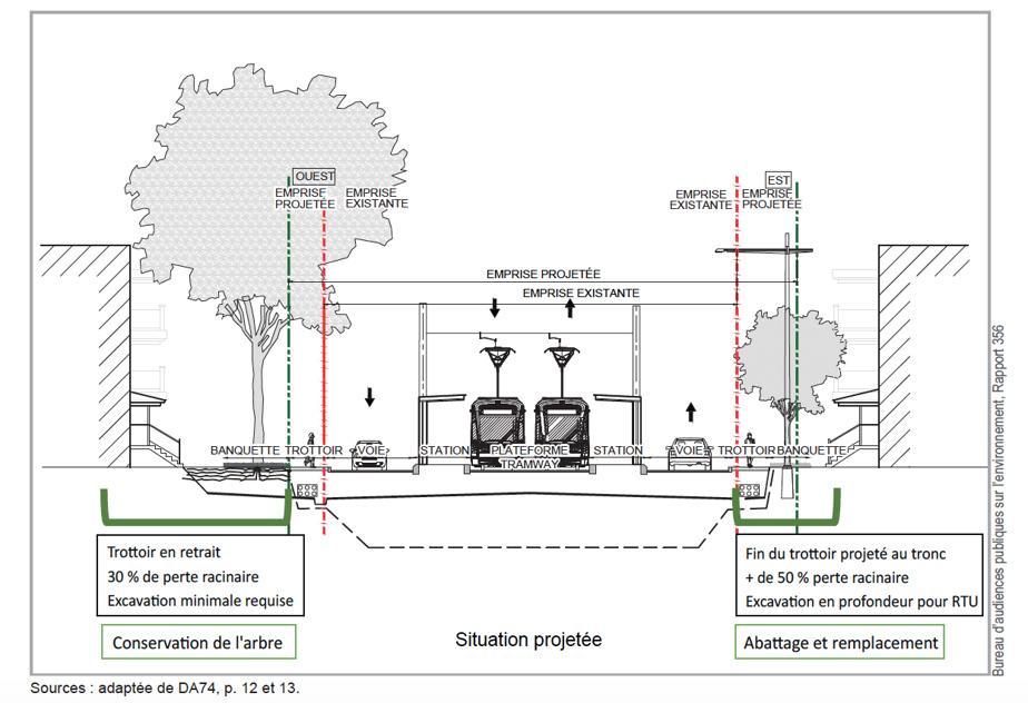 L'augmentation de l'emprise de la rue pour accueillir le tramway et deux voies automobiles nuit aux racines des arbres matures.