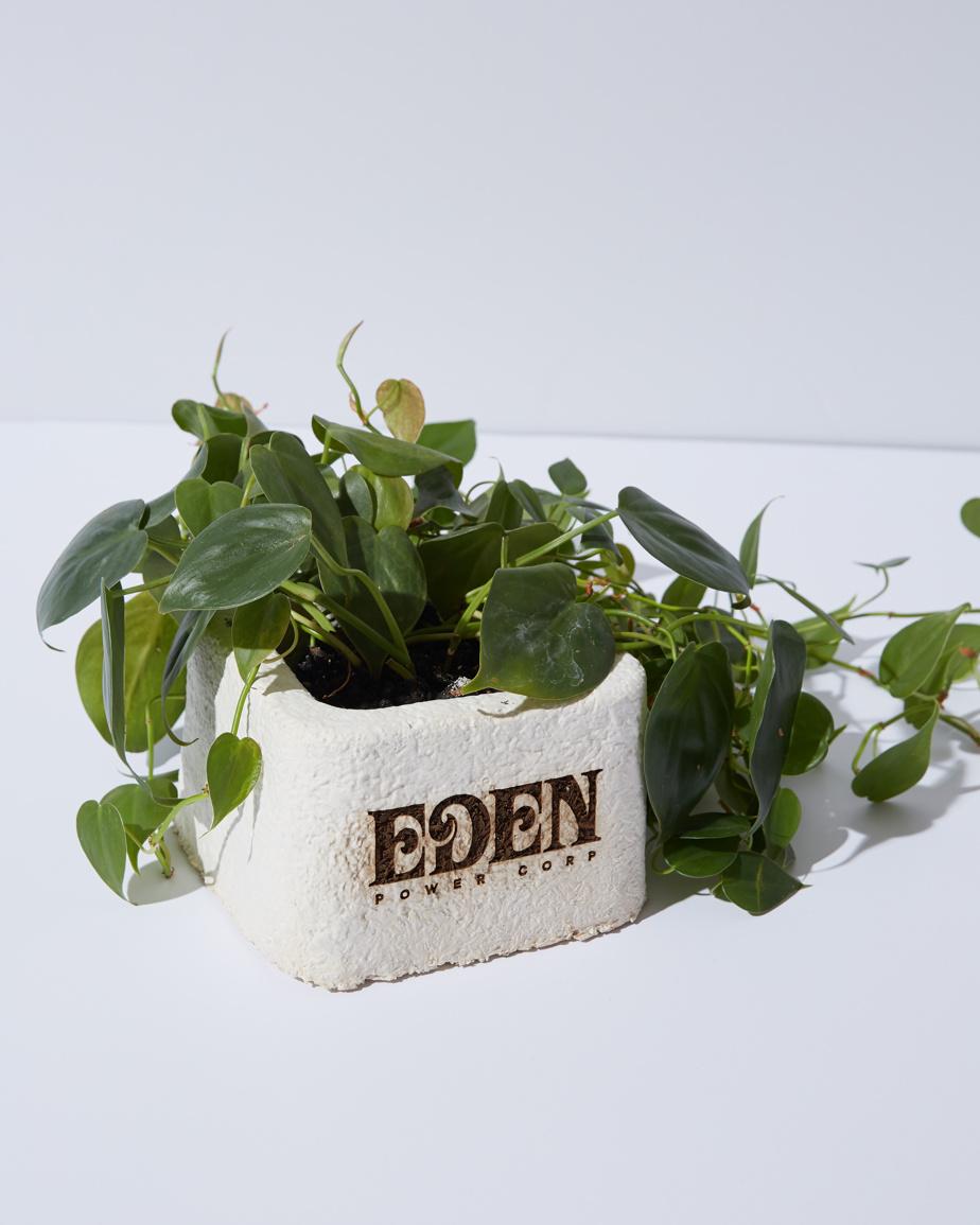 Vase à bouteille d'Eden Power Corp.