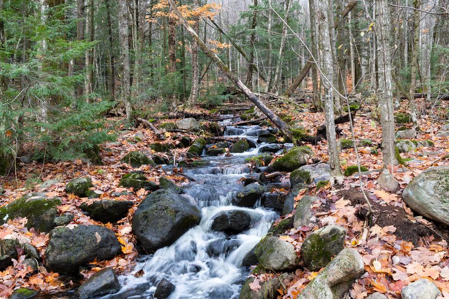 Une petite chute où l'eau coule d'un ruisseau traversant le parc. Un marécage occupe une grande portion du parc. La vocation du parc est la protection des milieux naturels.
