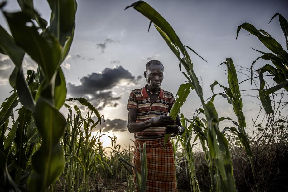 Au début de l'année 2020, le Kenya a connu sa pire infestation de criquets en 70ans. L'insecte s'est multiplié de façon prodigieuse en raison du climat et s'est propagé à la recherche de nourriture, envahissant plusieurs pays de l'Afrique de l'Est. Cette espèce est particulièrement destructrice pour l'agriculture et a ajouté à l'insécurité alimentaire dans un contexte pandémique. En lice dans la catégorie «Nature».