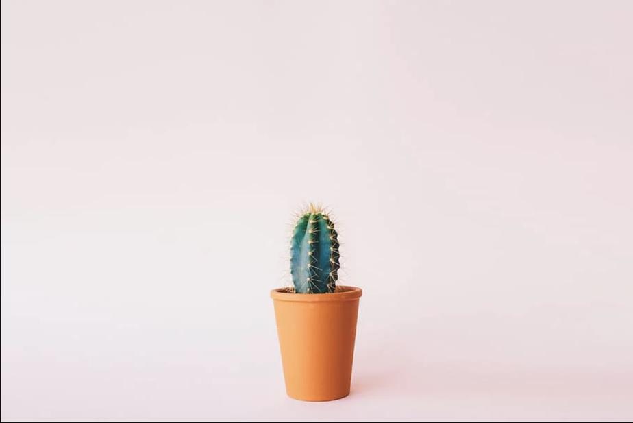 C'est une évidence, le cactus est le compagnon idéal en milieu de travail et vient dans une multitude de formes rigolotes. Pour affronter les périodes de sécheresse, le cactus emmagasine des réserves d'eau dans ses tissus. L'erreur la plus fréquente est d'ailleurs de troubler son équilibre en l'arrosant trop.
