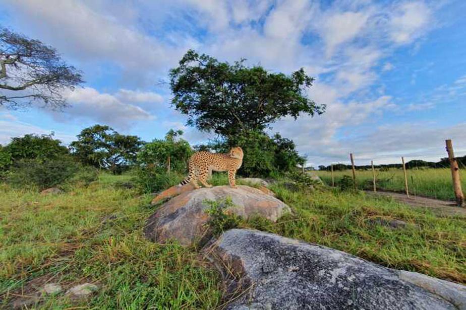 Le nouvel environnement de Kumbe et Jabari, en pleine savane. On voit ici l'un des deux frères découvrir son nouveau cadre de vie.