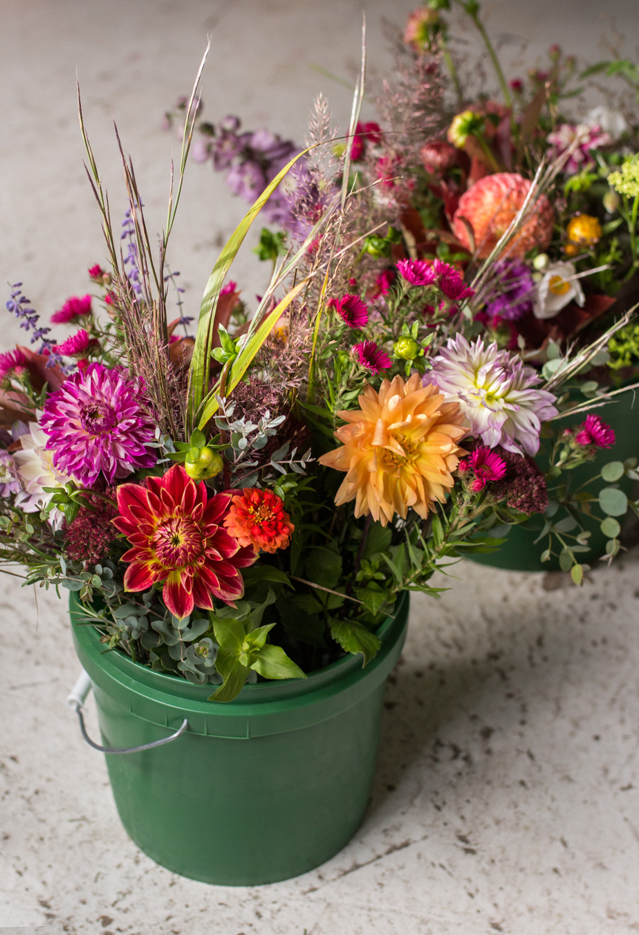 Featured in October: Dahlia, Aster and Grasses