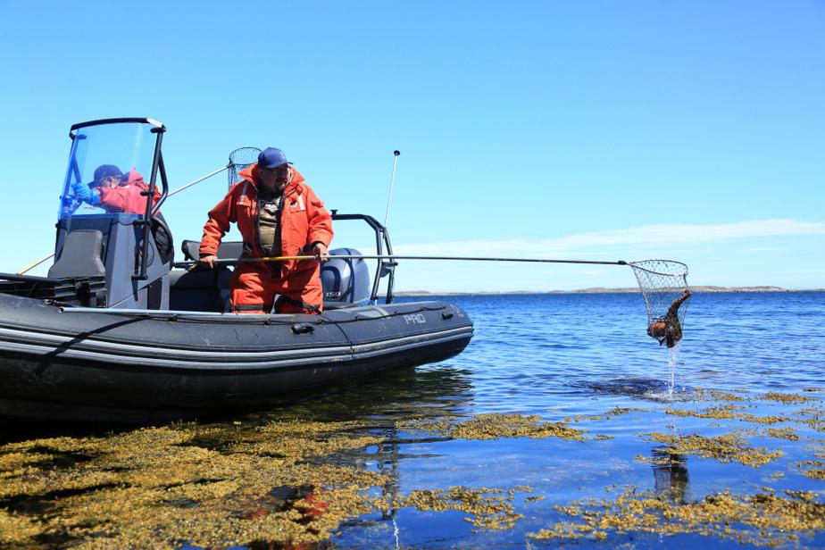 Stéphane Modat est allé à Natashquan récemment, où il a notamment rencontré Daniel, un pêcheur innu qui pêche le homard à l'épuisette.