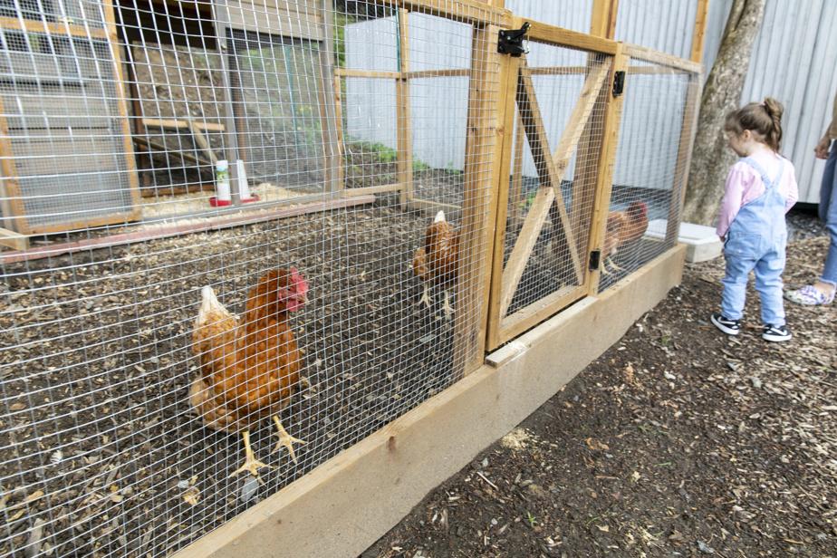 Les animaux de compagnie sont, ici, des poules.