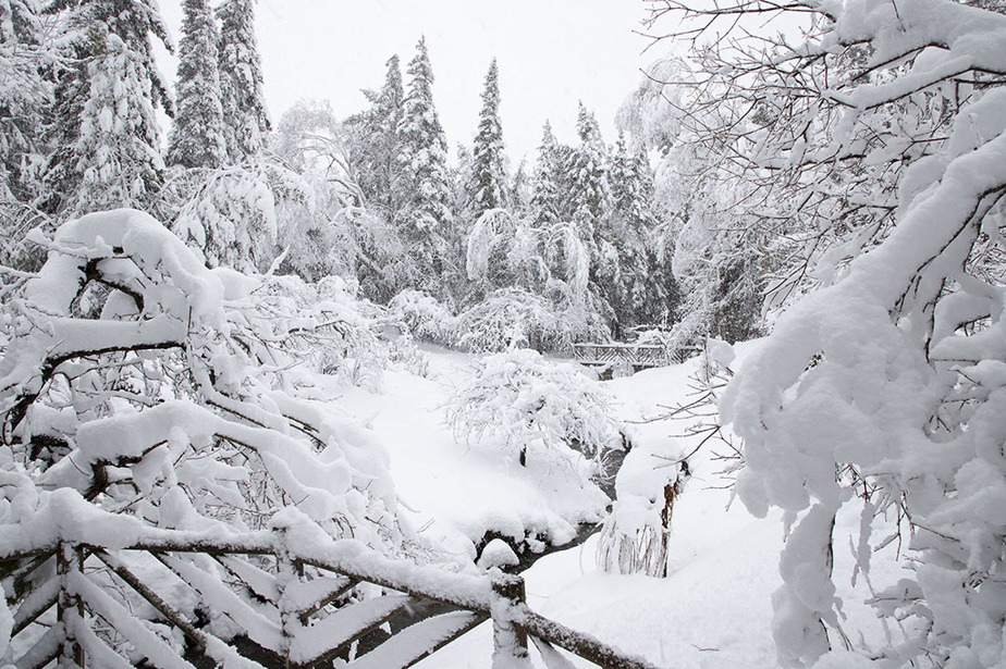On April 23, the gardens were covered with a white coat.