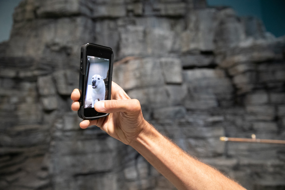 Par la magie de la réalité augmentée, il est désormais possible d'observer un ours blanc au Biodôme.