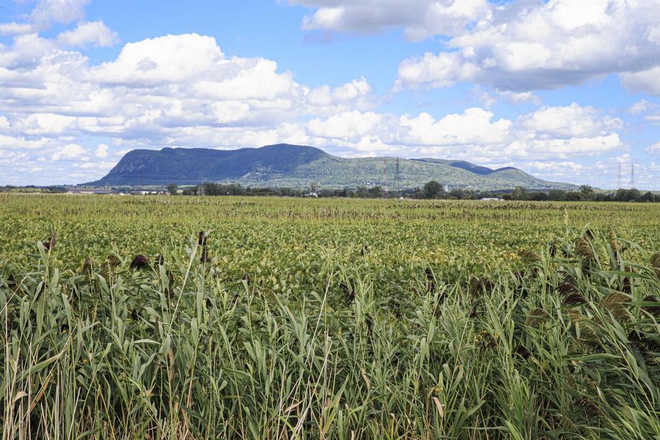 La piste cyclable longe des champs de maïs, derrière lesquels se dressent les collines Montérégiennes.