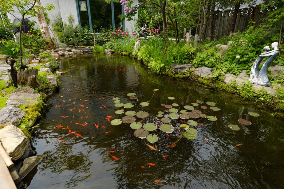 L'étang, d'une quarantaine de pieds (une douzaine de mètres) de long, a été creusé il y a 30ans.