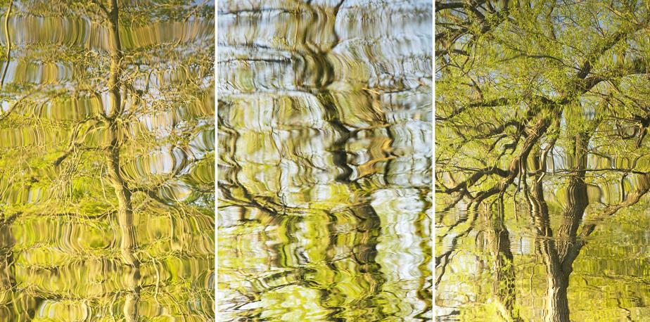 2020-05-22 (Tree Reflections), 2020, Hua Jin, impression numérique à jet d'encre sur papier métallique archive, trois éléments de 76,2cm x 50,8cm chacun
