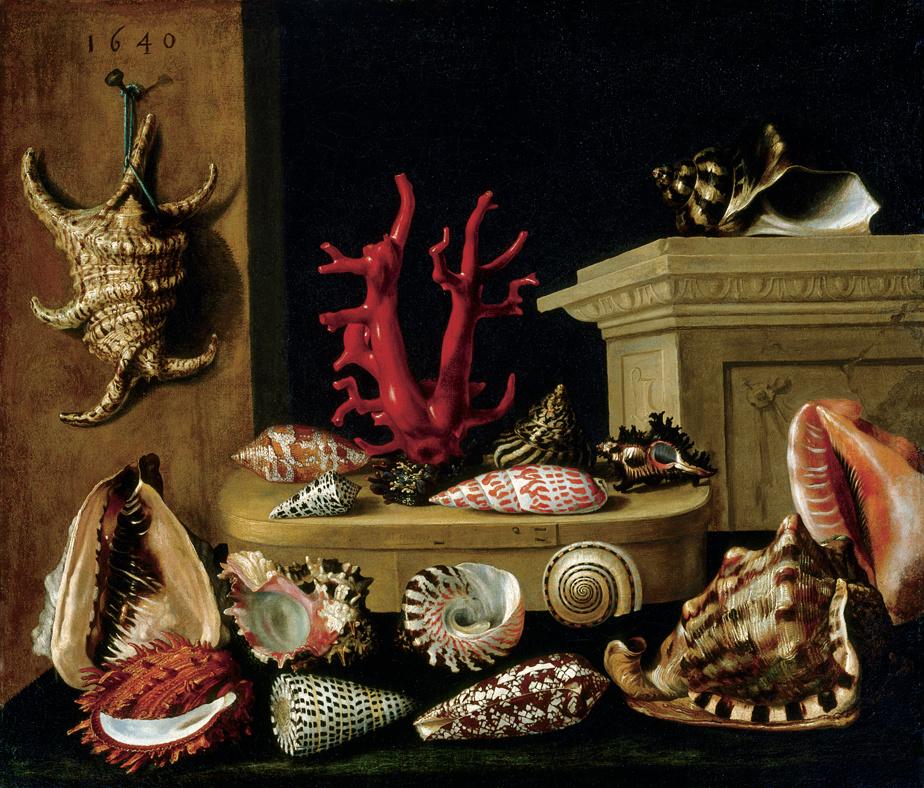 Nature morte aux coquillages et au corail, 1640, Jacques Linard, huile sur toile. Don de Michal Hornstein.