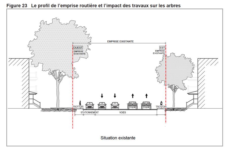 La rue avant l'insertion du tramway. On remarque l'espace dévolu au système racinaire desarbres.