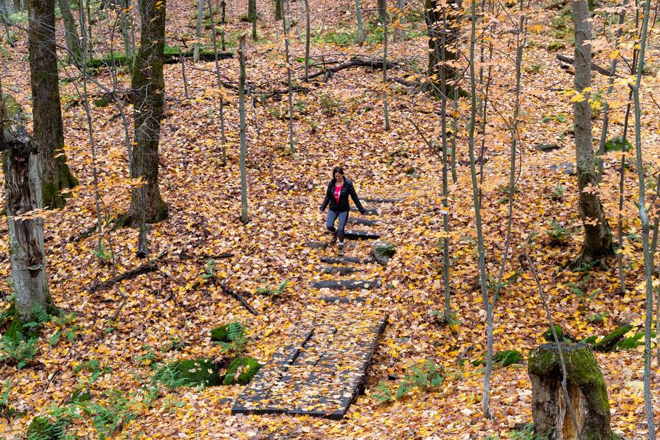 La fin de la saison des couleurs est arrivée. Des feuilles jonchent le sol, offrant un paysage automnal enchanteur.