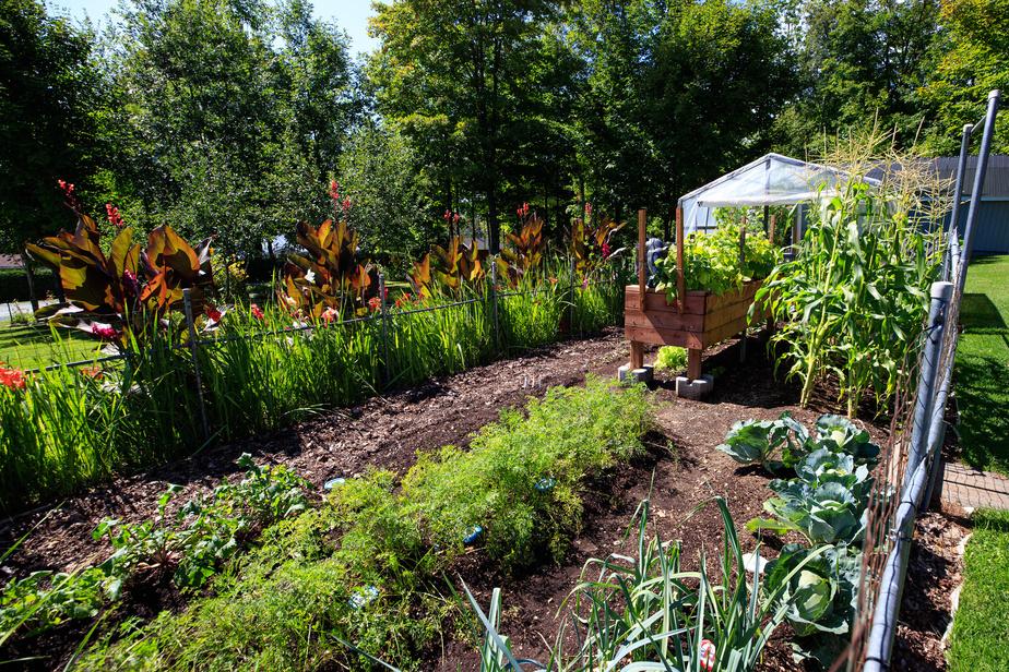Le potager regorge de tomates, piments, concombres, laitues, radis, épinards, choux, carottes, navets, patates, etc.