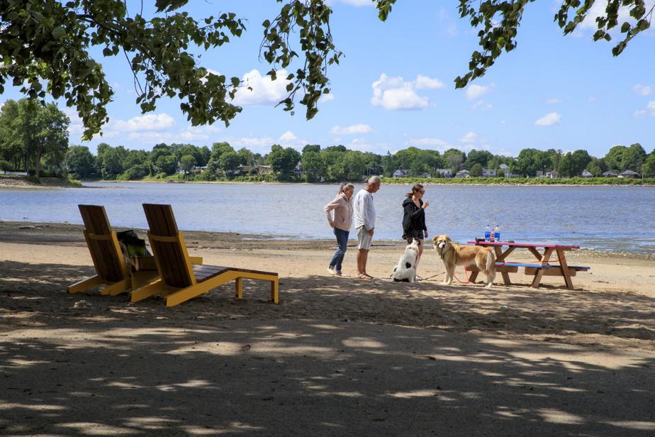 Des chiens font connaissance à la plage de la berge aux Quatre-Vents.