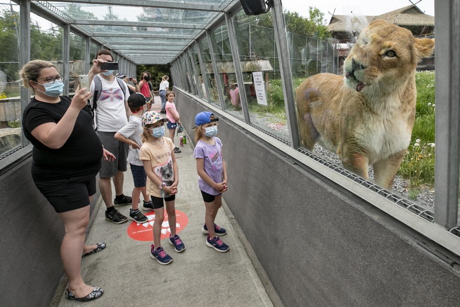 Toutes les familles rencontrées ont grandement apprécié le séjour. Notamment ce fameux déjeuner avec les lions.