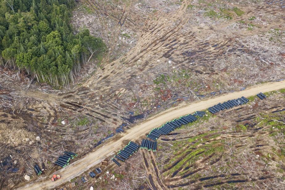 Site du futur concentrateur industriel du projet minier Nouveau Monde Graphite, dans Lanaudière