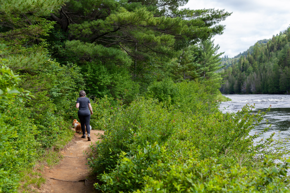Le sentier des Murmures longe la rivière Ouareau sur 5,5km (aller simple).