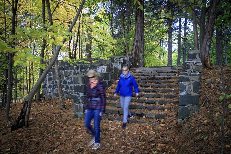 Ces marches de pierre au cœur de la forêt mènent les randonneurs vers d'anciennes fondations envahies par des cèdres et des épinettes à maturité.