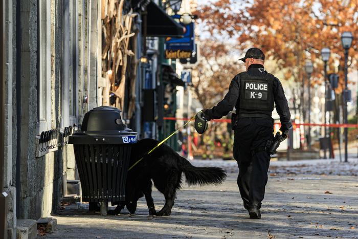 Un policier de l'escouade canine ratisse les rues du Vieux-Québec à la recherche d'une piste et d'indices.