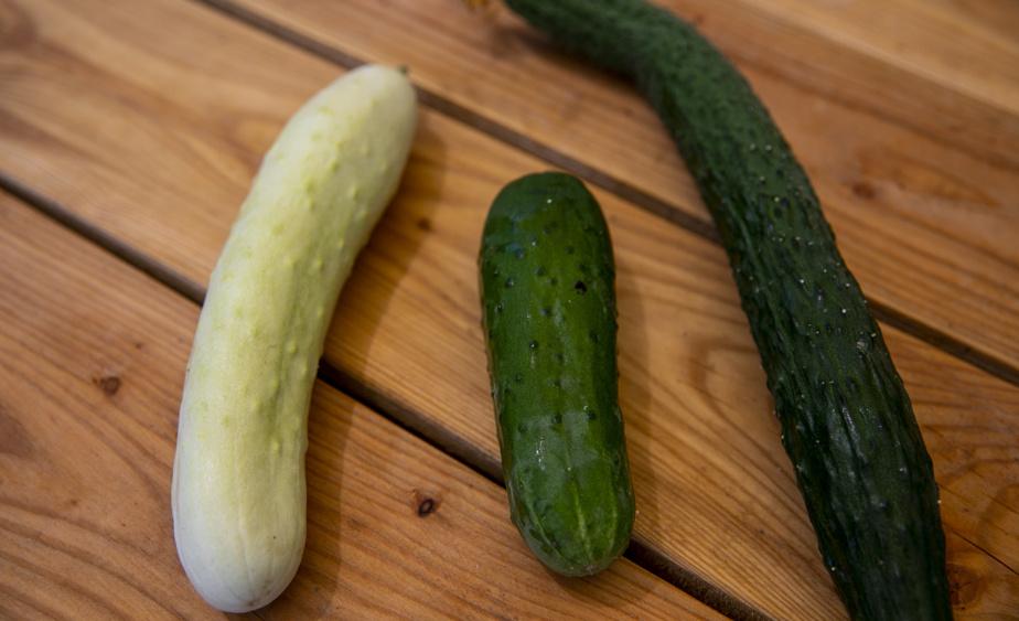 Dominic Labelle se passionne pour les variétés plus rares ou exotiques, comme ici un concombre japonais, un concombre chinois à la chair très verte et un autre issu de la société de semences de Dan Barber.