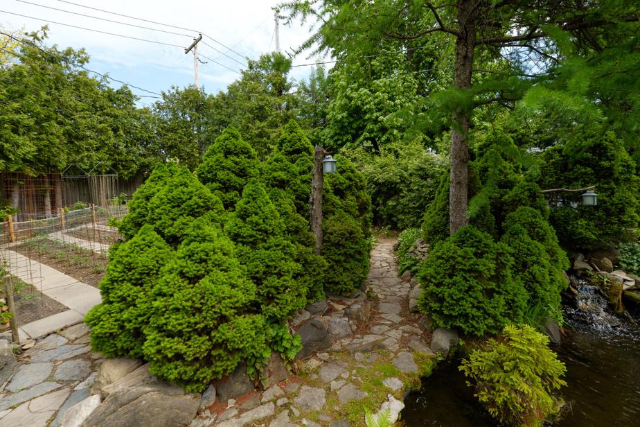 Les arbres ont été plantés de façon à donner un effet de profondeur. Ils délimitent aussi certains secteurs de la cour. Le potager est visible à l'arrière.