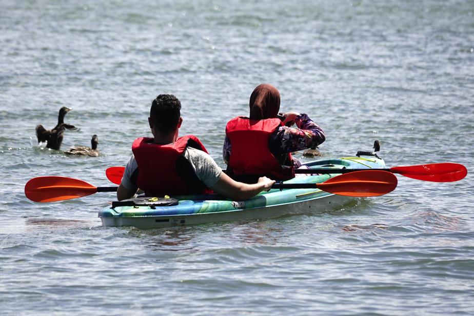 Un couple de kayakistes fait une pause pour photographier les canards colverts qui les accompagnent.