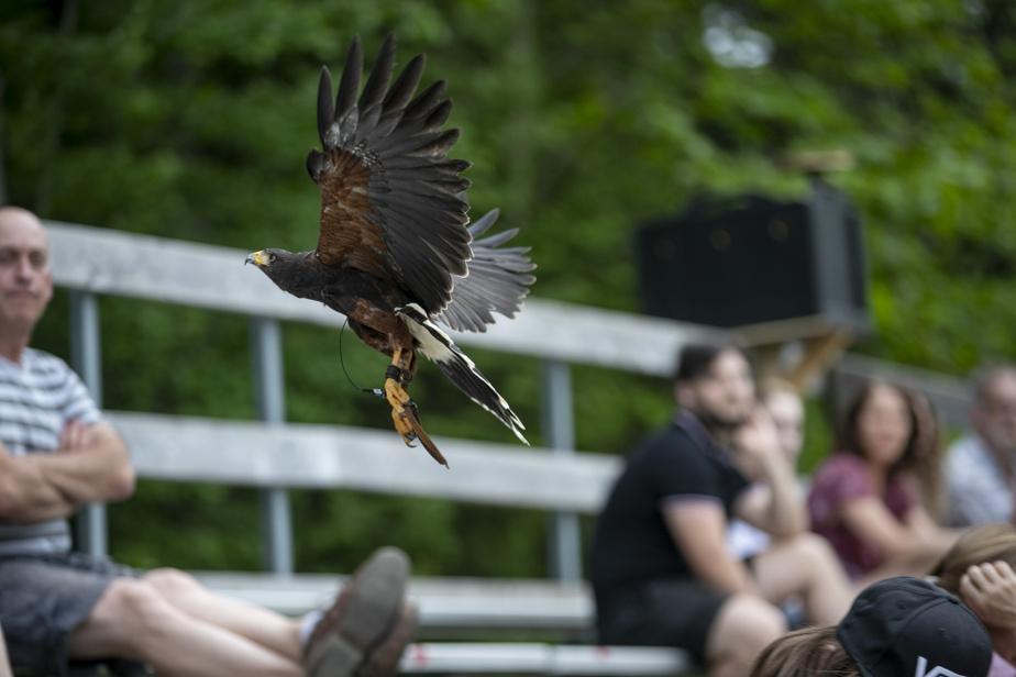 Le forfait propose une animation spectaculaire d'oiseaux de proie.