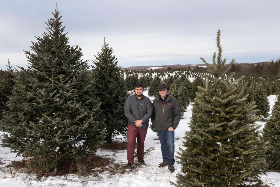 La demande américaine fait bondir le prix des sapins au Québec