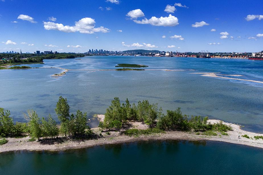 Le niveau du fleuve Saint-Laurent est si bas que de nouvelles îles sont apparues entre Longueuil et Montréal. Les précipitations moins abondantes ce printemps et une fonte des neiges rapide en sont les causes.