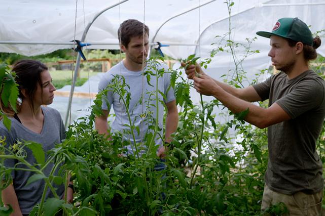 La tomate demeure l'un des fruits les plus faciles à apprivoiser par les apprentis mara?chers.