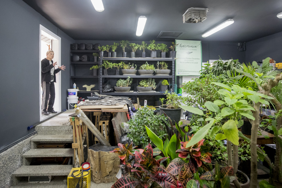 The exotic plants, kept warm in the garage during the cold season, will be installed in the shade from the end of May to mid-June, time to acclimatize.