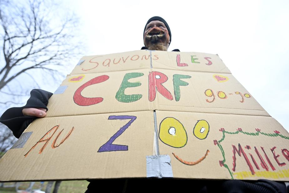 Des manifestants étaient au parc Michel-Chartrand, à Longueuil, pour dénoncer l'abattage de la moitié des cerfs du parc.