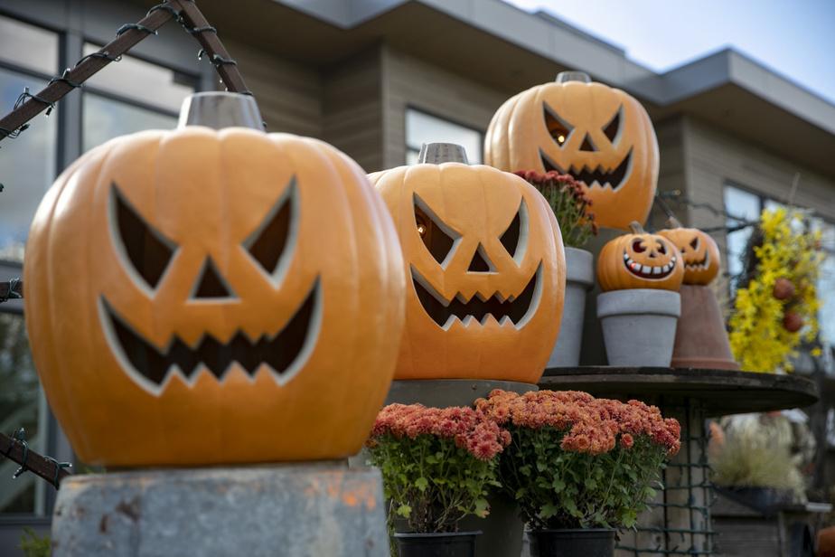 L'Halloween sans citrouilles, ce serait comme Noël sans sapins. Même si l'année2020 a été difficile, elles sont quand même là!