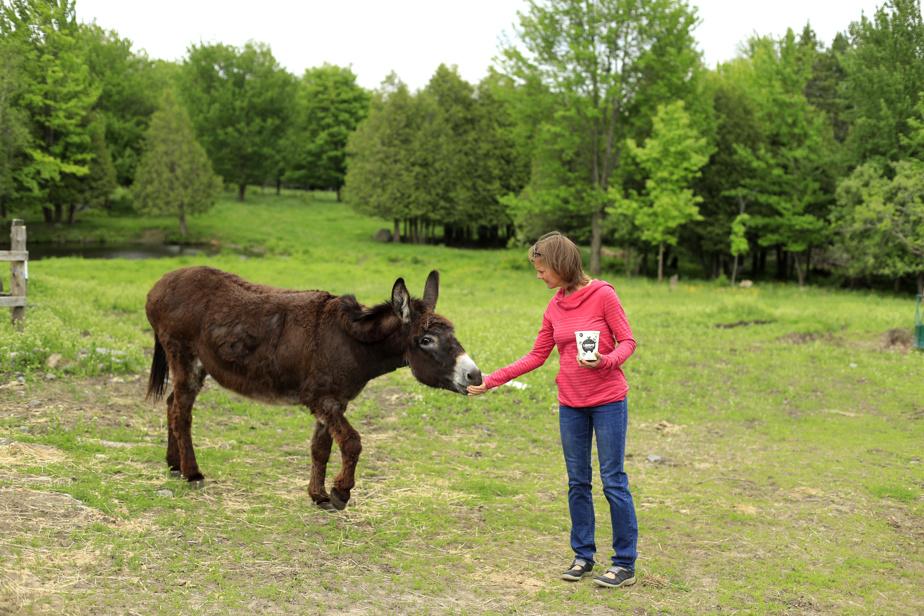 Nancy Gauthier nourrit Ariane l'ânesse, sans contredit la mascotte du vignoble.