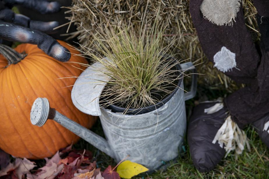 Entre les araignées et les citrouilles maléfiques, un arrosoir antique avec une touche végétale. De l'herbe à potion de sorcière? Ça se pourrait bien.