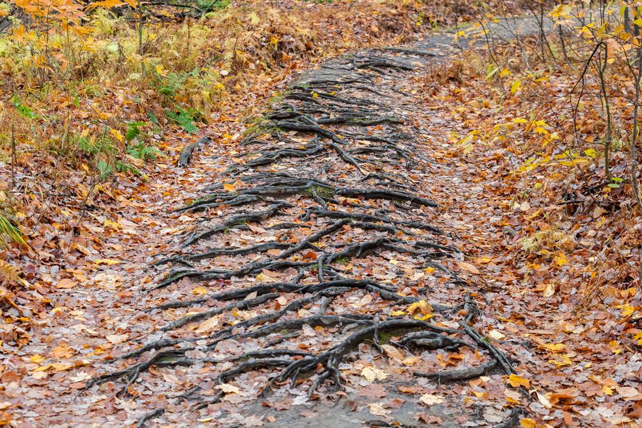 Le mont Shefford fait partie des Montérégiennes, vieilles de plus 100millions d'années.