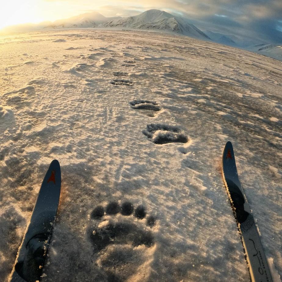 Des ours polaires rôdaient pendant l'expédition au Svalbard. Caroline Côté et son compagnon, Vincent Colliard, en ont vu deux.