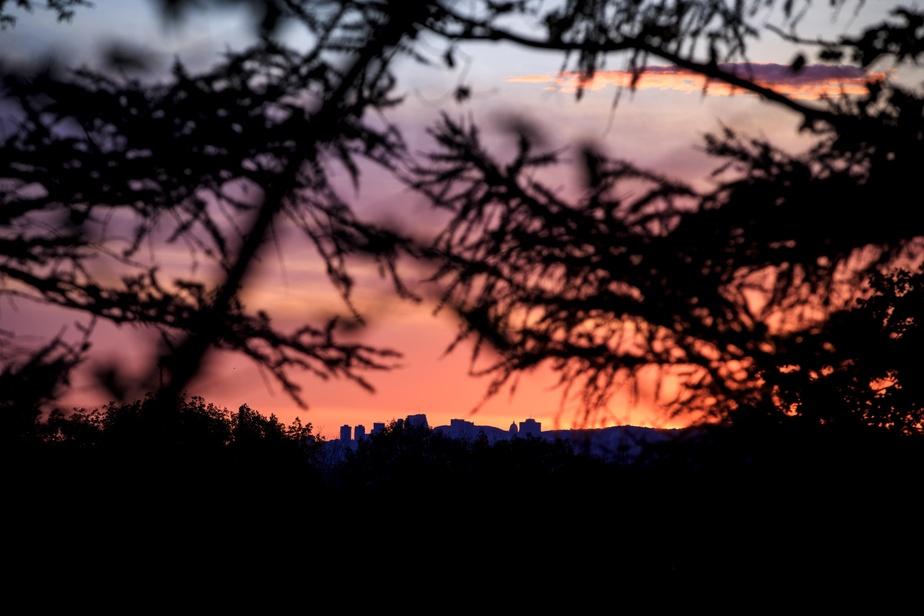 Silhouette de la ville de Montréal vue à travers les arbres du mont Saint-Bruno