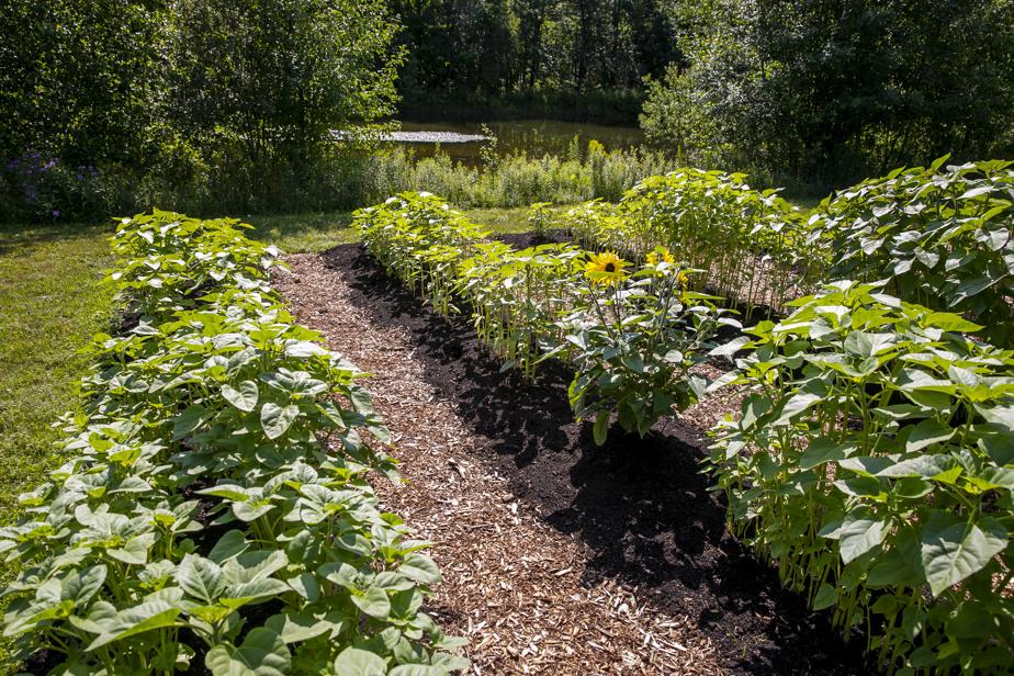 Cet été, Jennifer Brodeur a fait plusieurs tests sur sa terre agricole, en utilisant la méthode «no dig».
