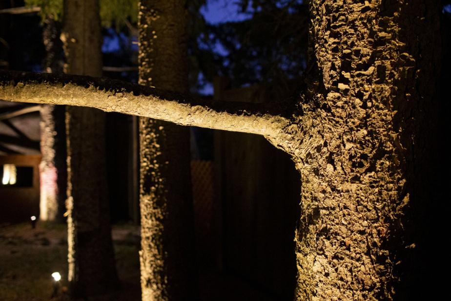 Le soir, l'éclairage a le potentiel de faire ressortir des textures discrètes durant le jour.