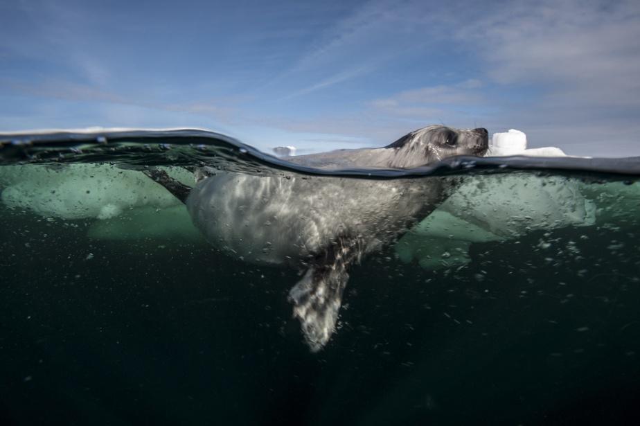 Un phoque photographié par MarioCyr