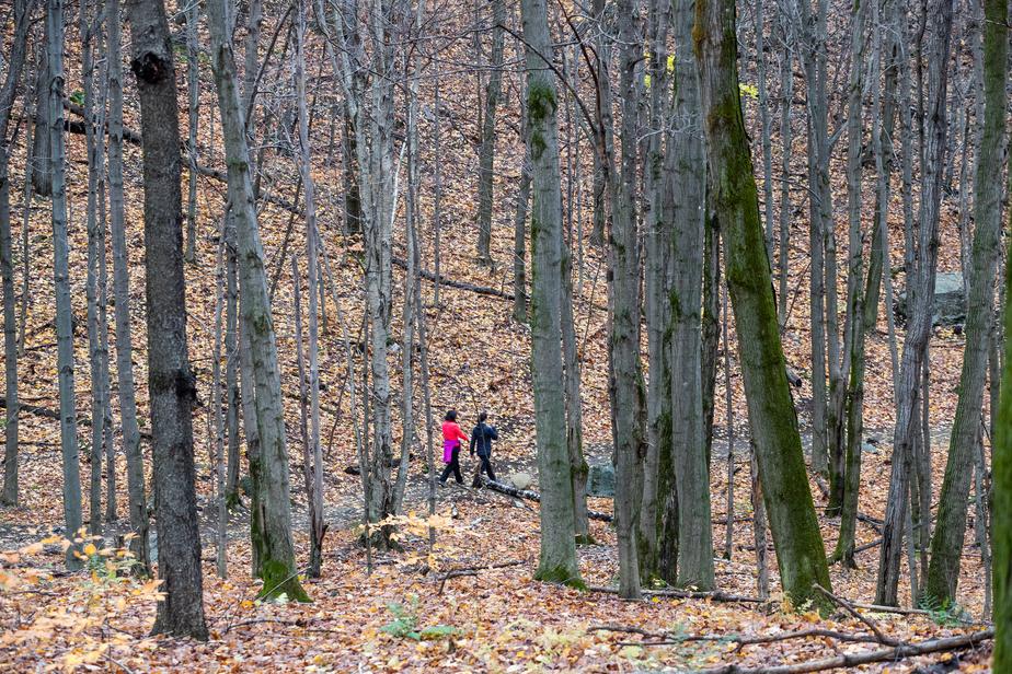 Le territoire forestier comprend deux érablières et des essences d'arbres diversifiées et matures.