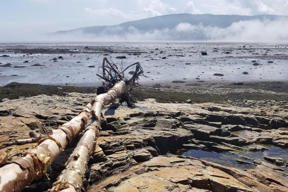 «J'ai récemment effectué un voyage à La Malbaie où mes enfants, ma copine et moi avons eu la chance d'effectuer une visite guidée des formations géologiques de la plage menant de La Malbaie à Cap-à-l'Aigle. La météo a contribué à donner à la visite un aspect surréel.» — Marc Gennaoui