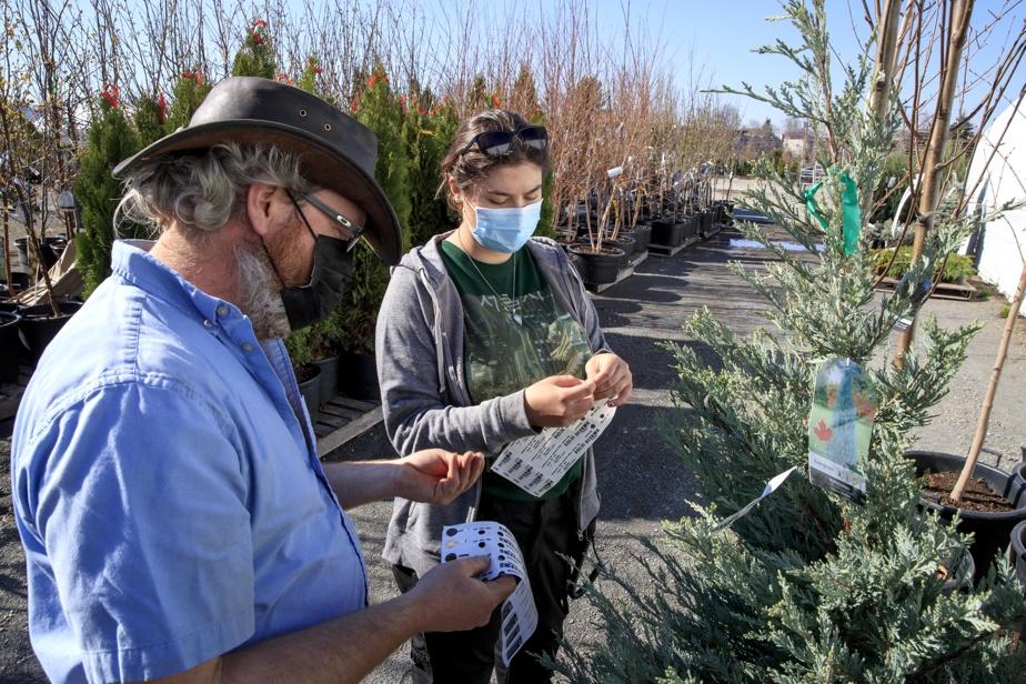 Des employés font l'étiquetage de plants et d'arbustes à la Pépinière Jasmin.