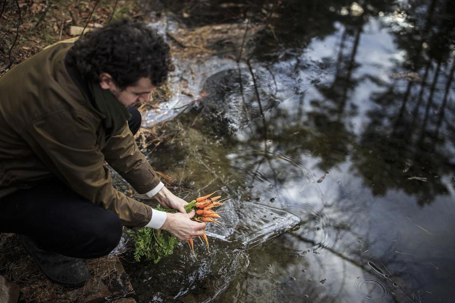 Clément rince les dernières carottes de l'année dans l'étang avant de les cuisiner.