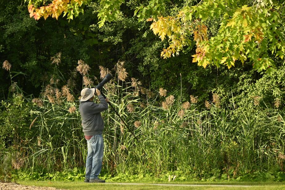 Un photographe amateur observe la faune.