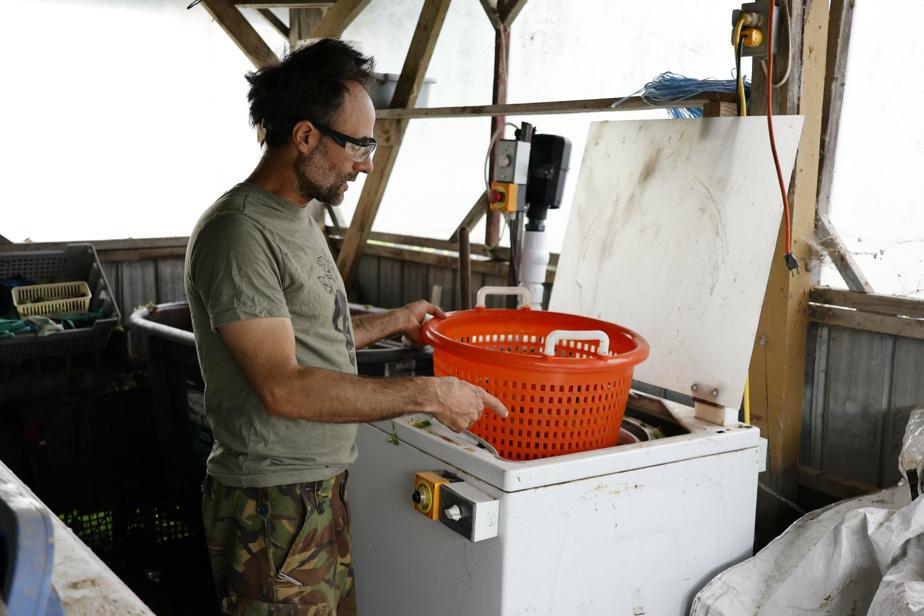 Yan Gordon, propriétaire des Potagers des nues mains, montre une machine à laver industrielle transformée en essoreuse à pommes de terre.