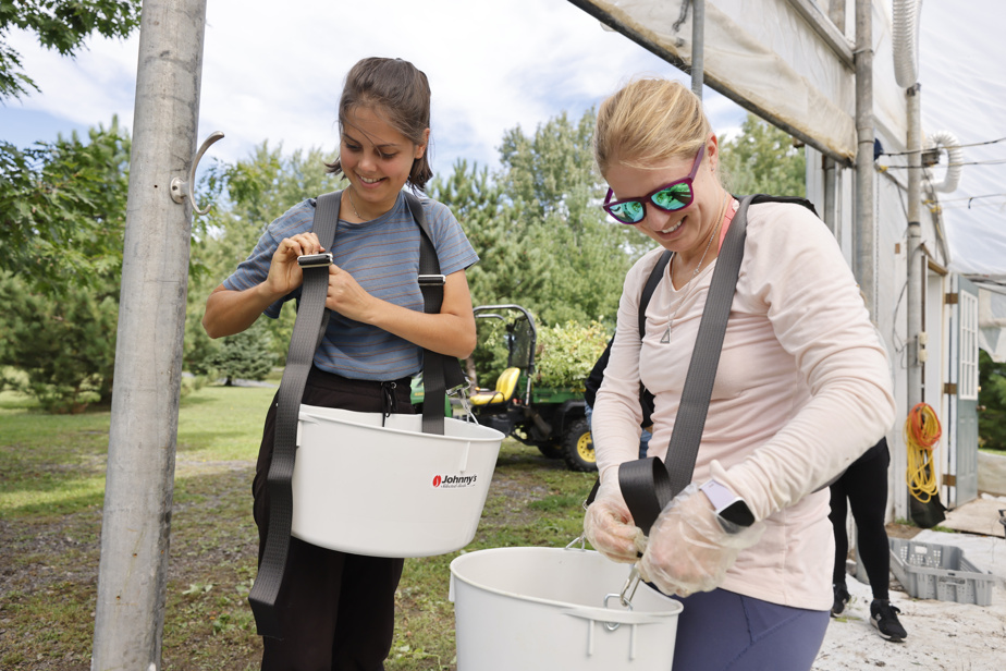 Pour les employés de l'OBNL Jour de la Terre, cette journée de glanage arrive à point, eux qui ont passé la dernière année et demie en télétravail. «Demain, on va faire tous ensemble de la sauce tomate, des tomates séchées et de la lactofermentation», explique Camille Dussault, conférencière pour l'organisme (à gauche), à qui revient l'initiative de l'activité. Kristin Mullin (à droite), qui travaille de chez elle à Kingston, en Ontario, est venue passer la semaine à Montréal pour l'occasion.